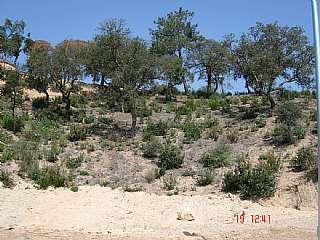 Terreno residenziale in Yitzhak rabin,s/n. Buenas vistas, zona tranquila,
