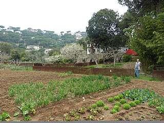 Finca rústica en Passatge costes d. Terreno rustico para agricultura/animales